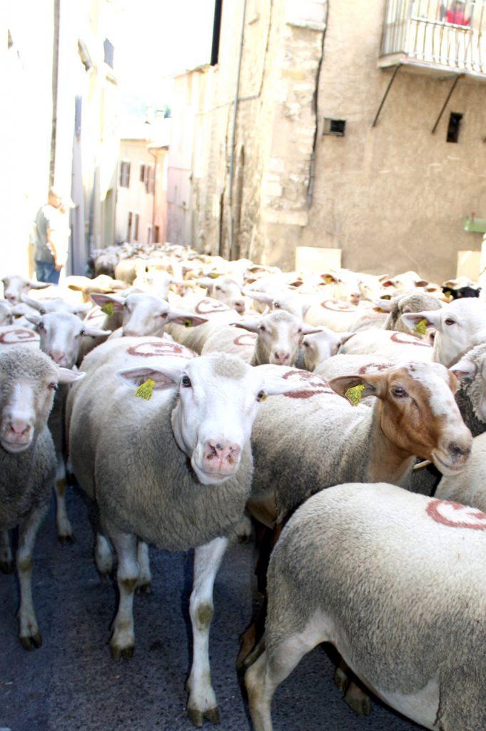 2016-05-20 fete agneau (6)